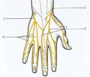 entumecimiento de dos dedos de la mano